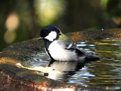 水場の野山の鳥③