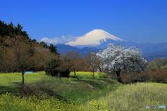 富士山の風景を求めて