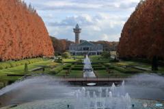 秋の公園 メタセコイア その2