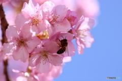 桜色に誘われて