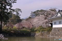 小田原城と桜2
