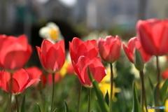 散歩道の花1