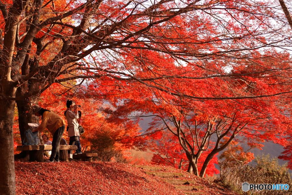思い思いの秋