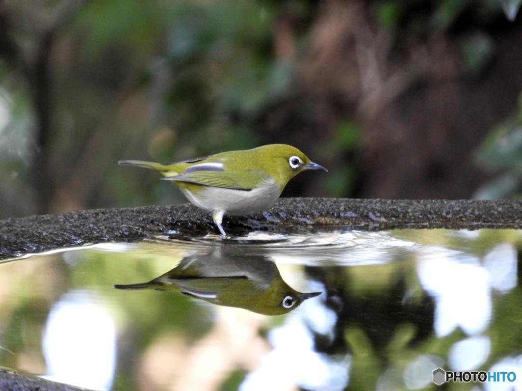 水場の野山の鳥①