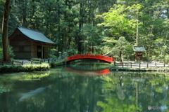 木漏れ日の池(事待池)