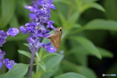 蝶と花 ⑧