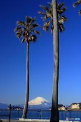 パームツリーと富士山