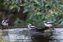 水場の野山の鳥④