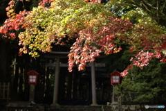 もう紅葉の季節2