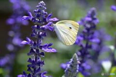 紫の世界で・・
