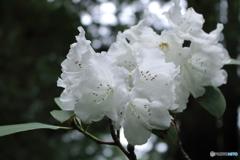 山寺の花笑み