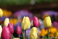 咲いた・・春だよ