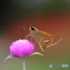 蝶と花XIII