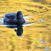 錦秋の池②