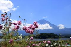 富士山と秋桜