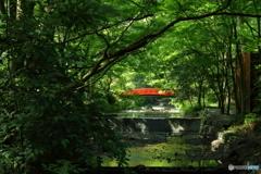 新緑の神聖な場所