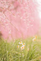 春の歌 〜共演〜