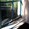窓辺<初夏>
