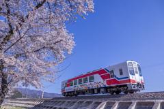 桜日和の三鉄