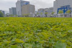 秋田市の風景