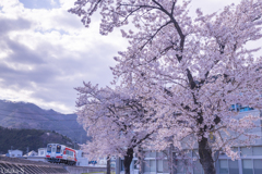桜日和の三鉄Ⅱ