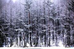 御射鹿ヶ池 冬03