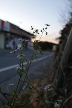 夜に咲いて