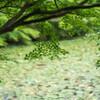 秋を待つ「長谷池」