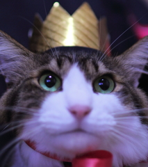 I am King of Cat !!!