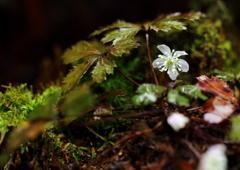 春の雨に輝く