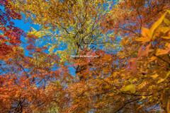 秋色エアブラシ
