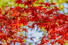 秋色はお好きですか