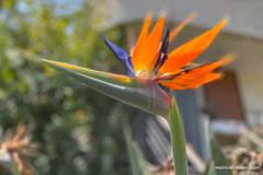舞い降りた花