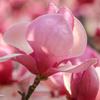 花満開の中での喪失感...