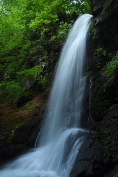 留春の滝 2019.5.22-1