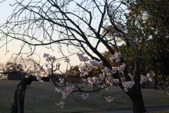 春は目の前(2)