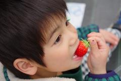 いちご狩り④ イチゴうまっ