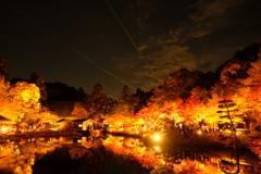 20181123東山植物園ライトアップ(1)