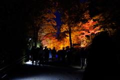 東山動植物園ライトアップ(3)
