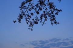 次の桜の季節には