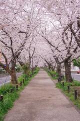 地元の桜スポット①