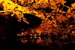 東山動植物園ライトアップ(2)