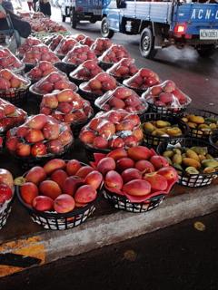 玉井 マンゴー市場