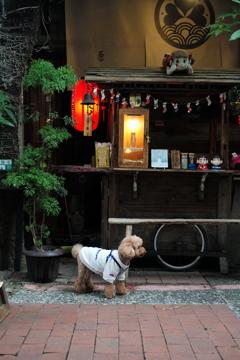 屋台とイヌ