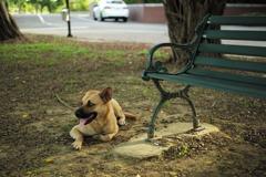 イヌとベンチ01