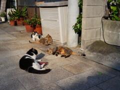 別府鉄輪温泉の猫