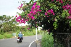 花とバイク