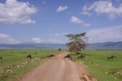 Road of Ngorongoro