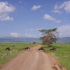 Road of Ngorongoro