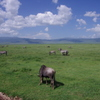 Ngorongoroの空と大地 動物たち